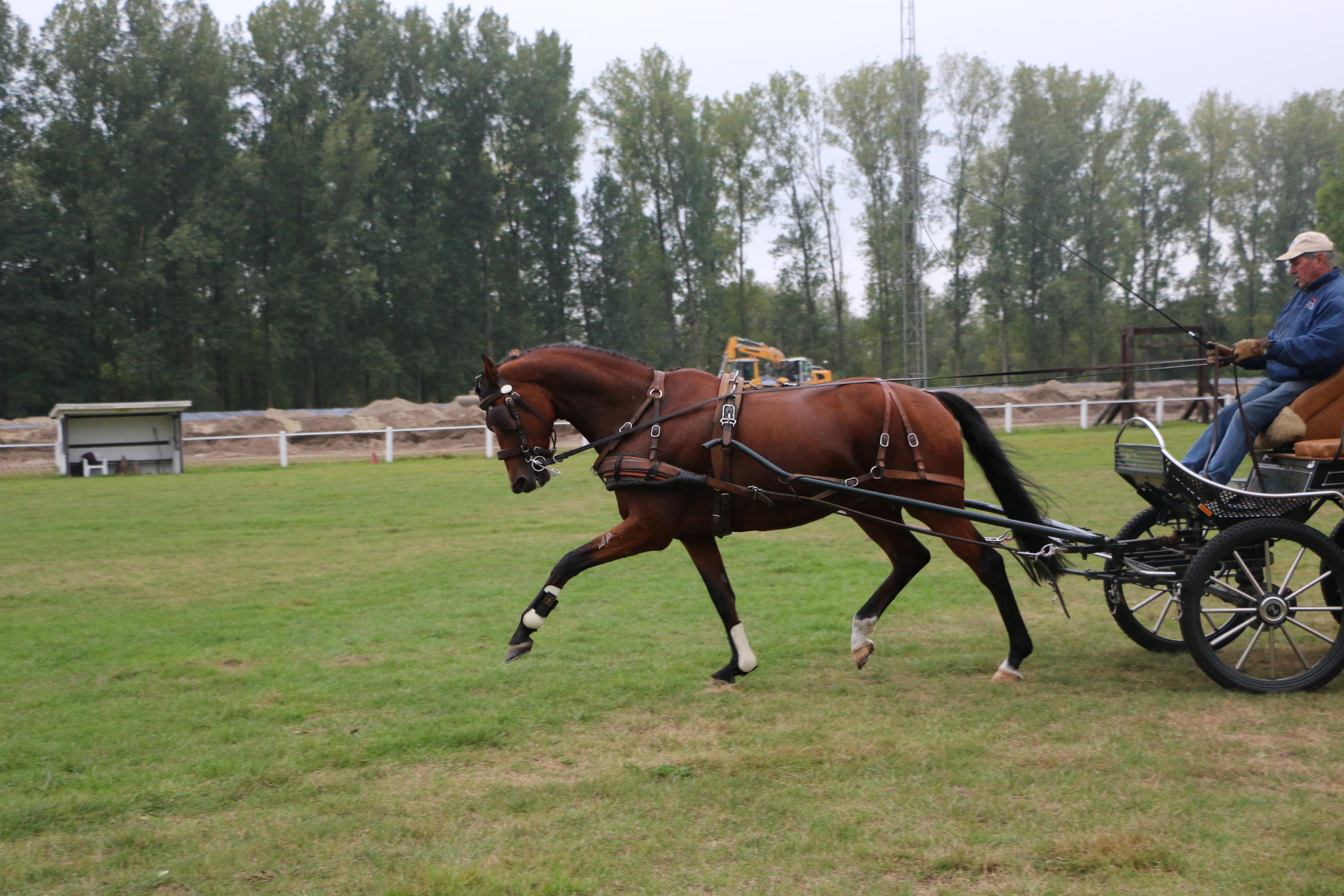 paarden te koop nl